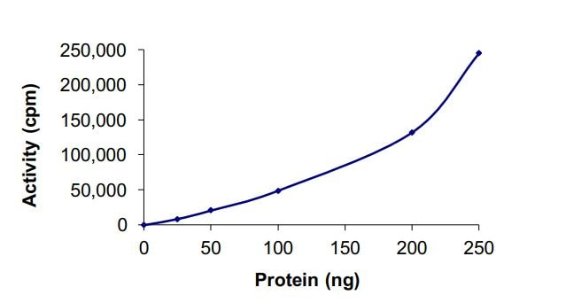 Functional Studies - Recombinant mouse IKK beta protein (Active) (ab268658)