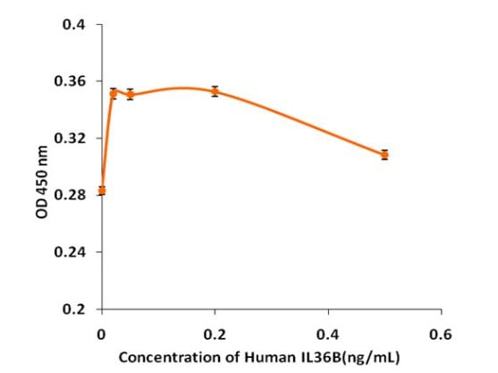 Functional Studies - Recombinant human IL36 beta/IL-1F8 protein (Active) (ab268671)