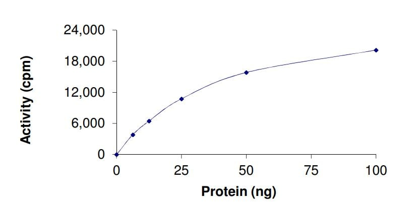 Functional Studies - Recombinant human KAT6B / MORF protein (ab268697)
