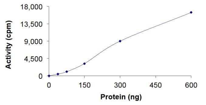 Functional Studies - Recombinant human MEK4/MKK4 protein (Tagged) (ab268754)