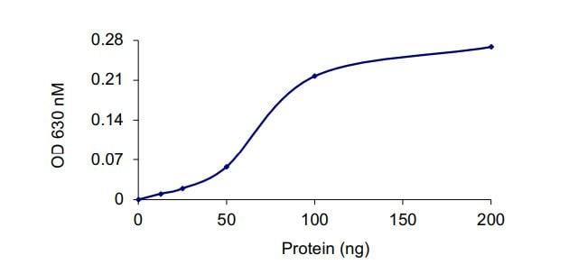 Functional Studies - Recombinant human PTEN protein (ab268894)