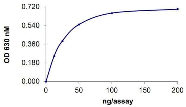Functional Studies - Recombinant human SHP1 protein (Tagged) (ab268904)