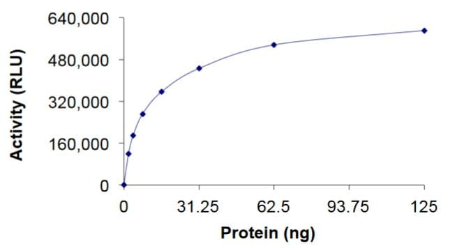 Functional Studies - Recombinant human RHOC protein (Tagged) (ab268935)