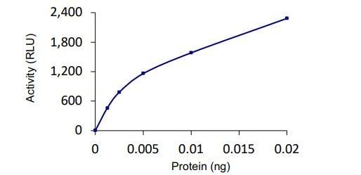 Functional Studies - Recombinant human SENP8 protein (ab268955)