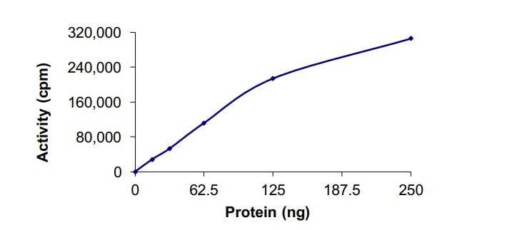 Functional Studies - Recombinant human SGK protein (ab268964)