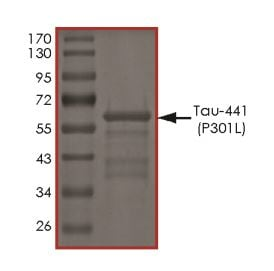 SDS-PAGE - Recombinant Human Tau protein (ab269007)
