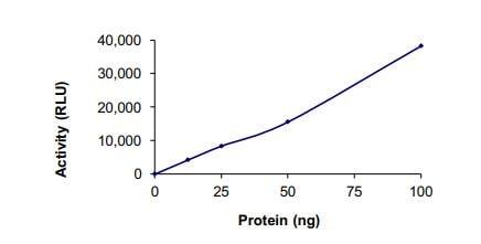 Functional Studies - Recombinant human TNFAIP3 protein (ab269059)