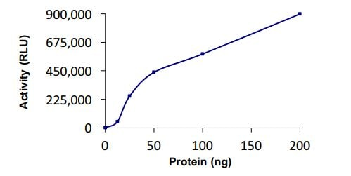 Functional Studies - Recombinant human UBE2E3 protein (ab269100)