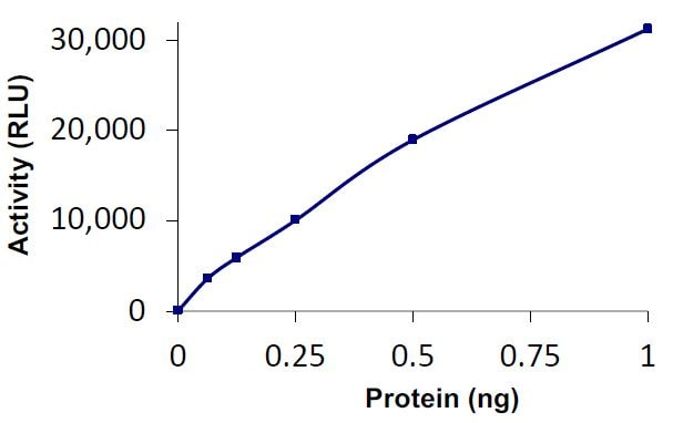 Functional Studies - Recombinant human USP35 protein (Tagged) (ab269122)
