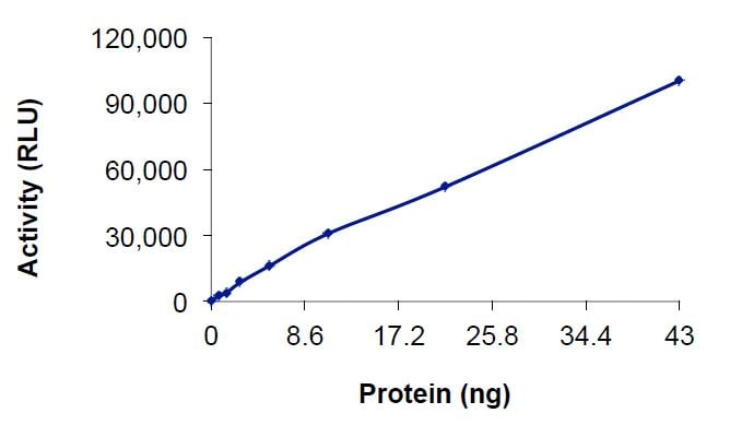 Functional Studies - Recombinant human WNK3 protein (Tagged) (ab269136)