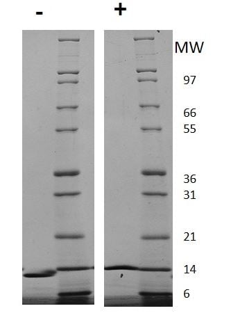 SDS-PAGE - Recombinant human IL-4 protein (Active) (ab269147)