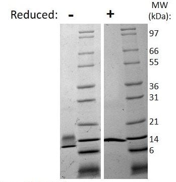 SDS-PAGE - Recombinant human NGF protein (Active) (ab269170)