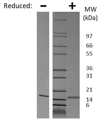 SDS-PAGE - Recombinant mouse TRAP/CD40L protein (Active) (ab269180)