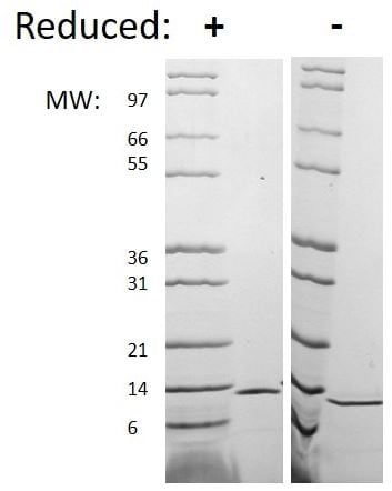 SDS-PAGE - Recombinant mouse IL-4 protein (Active) (ab269184)