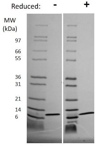 SDS-PAGE - Recombinant Pig IL-8 protein (ab269201)