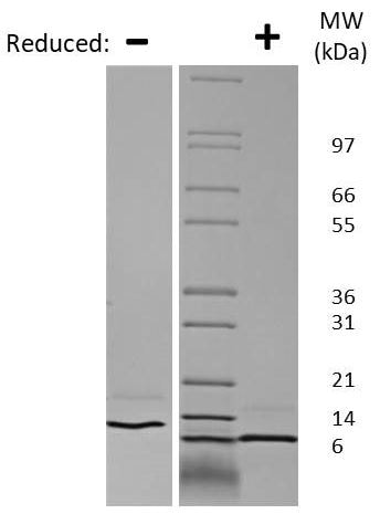 SDS-PAGE - Recombinant Human GRO alpha protein (ab269218)