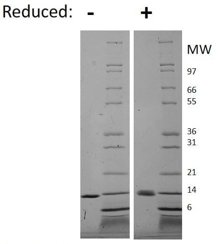 SDS-PAGE -  Human IL-9 protein (Active) (ab269250)