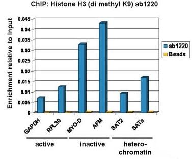 ChIP - AFMpositive controlChIP primer pair (ab269259)