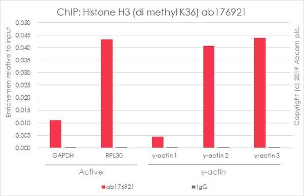 ChIP - RPL30positive controlChIP primer pair (ab269262)