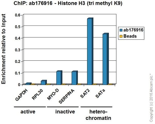 ChIP - SAT-alphapositive controlChIP primer pair (ab269263)
