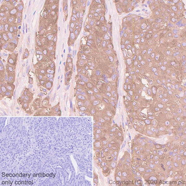 Immunohistochemistry (Formalin/PFA-fixed paraffin-embedded sections) - Anti-Acetyl Coenzyme A carboxylase alpha antibody [EPR23235-47] (ab269272)