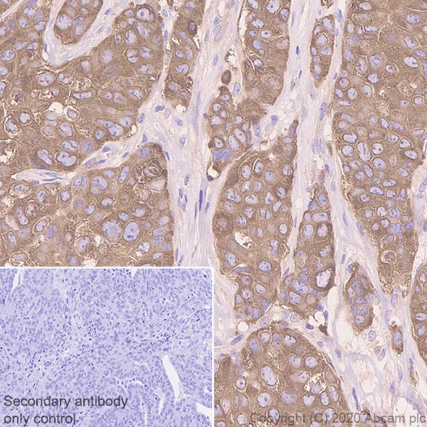 Immunohistochemistry (Formalin/PFA-fixed paraffin-embedded sections) - Anti-Acetyl Coenzyme A carboxylase alpha antibody [EPR23235-147] (ab269273)