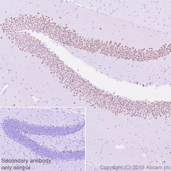 Immunohistochemistry (Formalin/PFA-fixed paraffin-embedded sections) - Anti-Ctip2 antibody [EPR23120-25] - BSA and Azide free (ab269367)