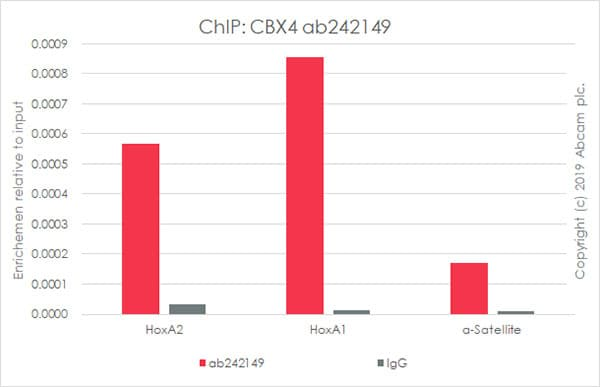 ChIP - Anti-CBX4 antibody [EPR23053-7] - BSA and Azide free (ab269462)