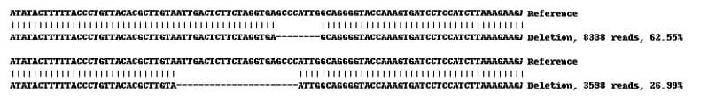 Next Generation Sequencing - Human HSP90AB1 (Hsp90 beta) knockout A-431 cell line (ab269491)