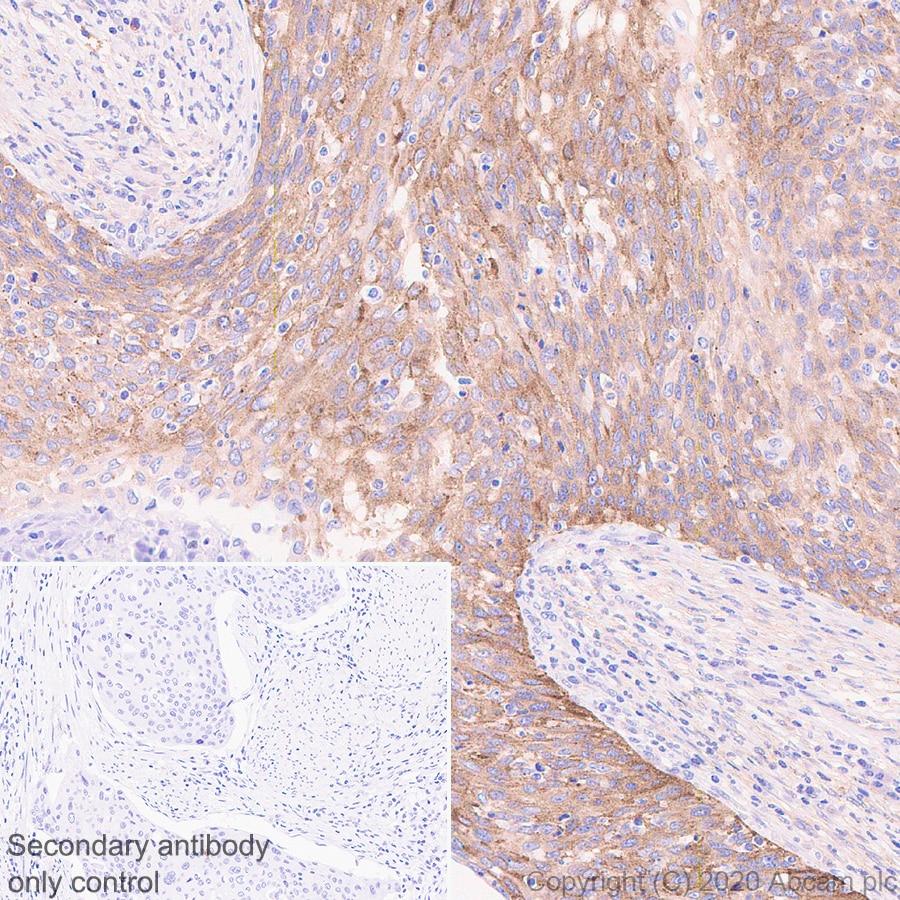 Immunohistochemistry (Formalin/PFA-fixed paraffin-embedded sections) - Anti-Transferrin Receptor antibody [H68.4] - BSA and Azide free (ab269514)