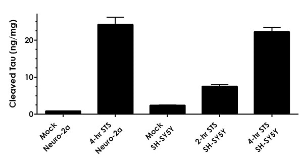 Comparison of staurosporine treated and mock treated Neuro-2a and SH-SY5Y cell extracts.