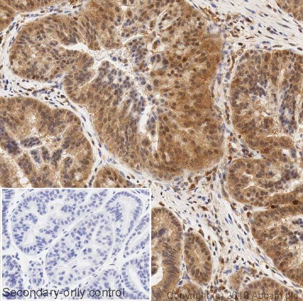 Immunohistochemistry (Formalin/PFA-fixed paraffin-embedded sections) - Anti-ERK2 antibody [1B3B9] - BSA and Azide free (ab269567)