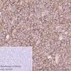 Immunohistochemistry (Formalin/PFA-fixed paraffin-embedded sections) - Anti-CD86 antibody [EP1158-37] (ab269587)