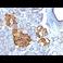 Immunohistochemistry (Formalin/PFA-fixed paraffin-embedded sections) - Anti-Chromogranin A antibody (ab269807)