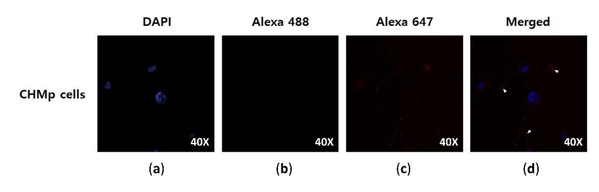 Immunocytochemistry - Alexa Fluor 647 Conjugation Kit (Fast) Lightning-Link (ab269823)