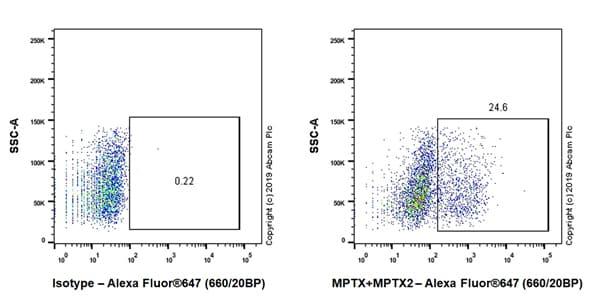 Flow Cytometry - Anti-MPTX+MPTX2 antibody [EPR20920-19] - BSA and Azide free (ab269857)