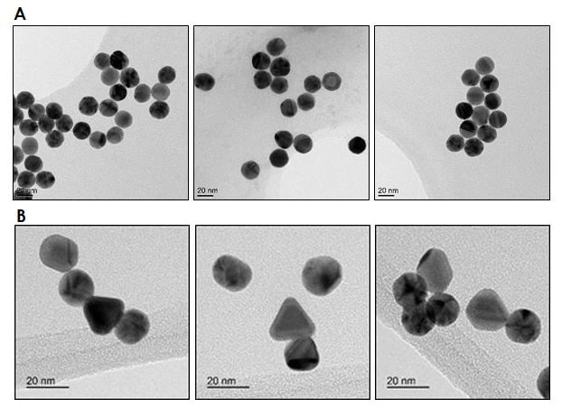 Electron Microscopy - 20nm Gold Nanoparticles (15 OD) (ab269937)