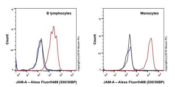 Flow Cytometry - Anti-Junctional Adhesion Molecule 1/JAM-A antibody [EPR23244-12] - BSA and Azide free (ab269950)