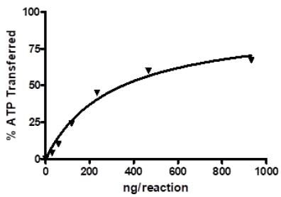 Functional Studies - Recombinant human ErbB2 / HER2 protein (Active) (ab269979)
