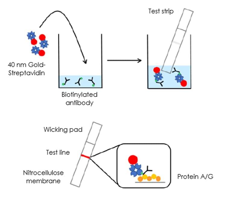Antibody Biotinylation Check Kit (ab270030)