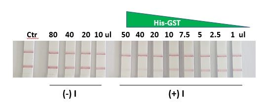 His-Tag Protein Expression Check Kit