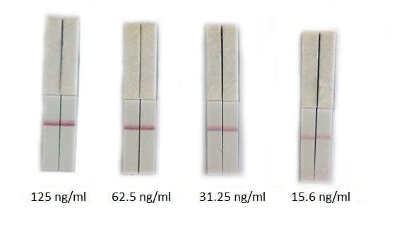 Streptavidin Antibody Conjugation Check Kit