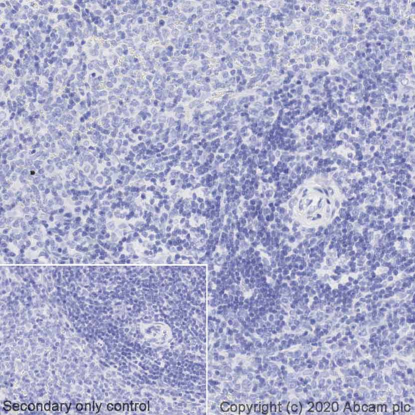 Immunohistochemistry (Formalin/PFA-fixed paraffin-embedded sections) - Anti-Rabbit antibody [SP137] (HRP) (ab270144)