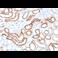 Immunohistochemistry (Formalin/PFA-fixed paraffin-embedded sections) - Anti-Cadherin 16 antibody [CDH16/1532R] (ab270263)