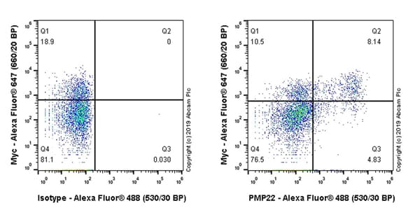 Flow Cytometry - Anti-PMP22 antibody [EPR23112-110] (ab270400)