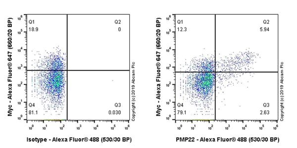 Flow Cytometry - Anti-PMP22 antibody [EPR23113-31] - BSA and Azide free (ab270406)