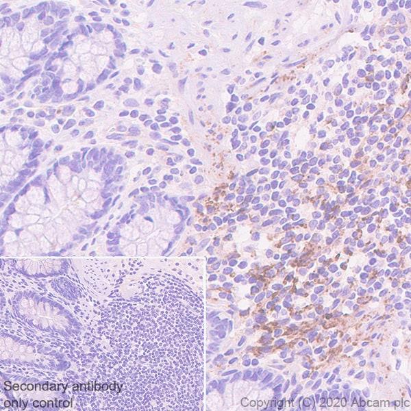 Immunohistochemistry (Formalin/PFA-fixed paraffin-embedded sections) - Anti-BCA1 antibody [EPR23400-92] - BSA and Azide free (ab270408)