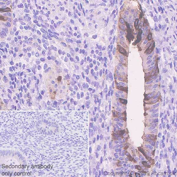 Immunohistochemistry (Formalin/PFA-fixed paraffin-embedded sections) - Anti-PAEP/Glycodelin antibody [EPR23251-87] (ab270454)