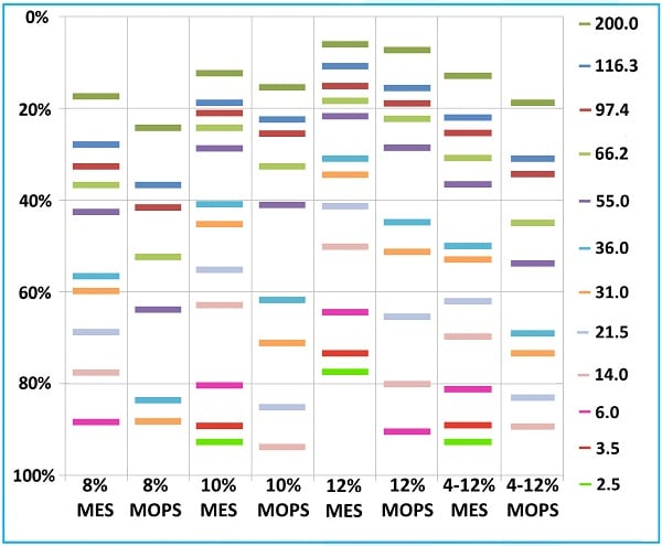 SDS-PAGE - Bis-Tris Precast Gels - RunBlue™ (12%, 17-well, 10x10cm) (ab270466)