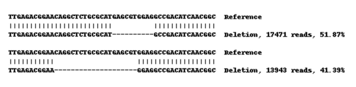 Next Generation Sequencing - Human KRT19 knockout MCF7 cell line (ab270482)